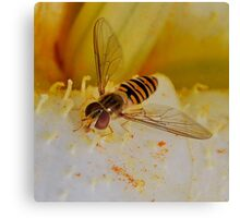 Hoverfly Close up Canvas Print