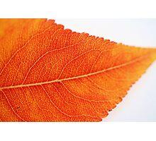 Autumn vein Photographic Print