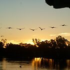 Pelicans Galore  by wilderness