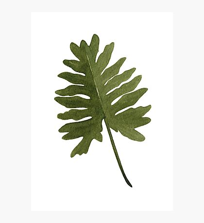 Green Leaf Two Photographic Print