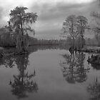 my sweet home, Louisiana by leapdaybride