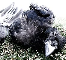 Roadkill Crow by Photogothica