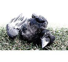 Roadkill Crow Photographic Print