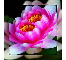 God's flowers © Photographic Print