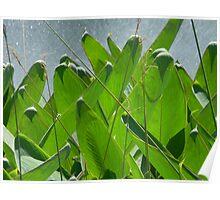Sprinkler Green Poster