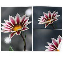 Triple Purple & White Flower Poster