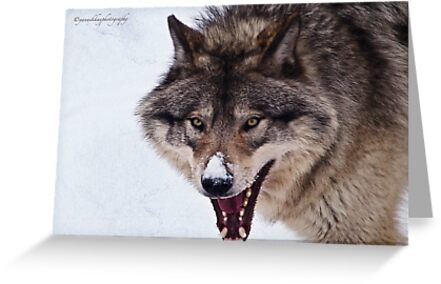 Snarling Wolf by Yannik Hay