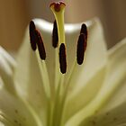Stamen Up Close by PinkK