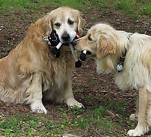 Dogs Rules: We Play, We Share! Featured Photo by AliceMc