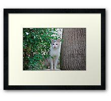 Petra Puss...Don't Come Any Closer...I Am a Mean Cat!! Framed Print