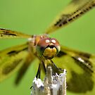 Halloween Pennant closeup. by William Brennan