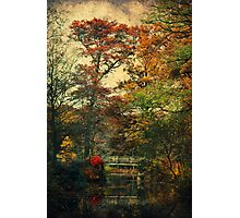 Forest Vintage Photographic Print