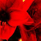 Amaryllis abstract by AD-DESIGN