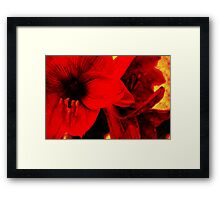 Amaryllis abstract Framed Print
