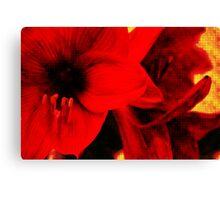 Amaryllis abstract Canvas Print