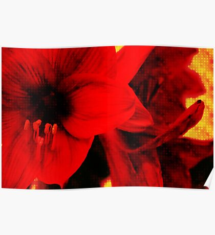 Amaryllis abstract Poster