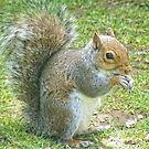 Squirrel by Ann Persse