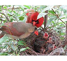 Cardinal Family Photographic Print