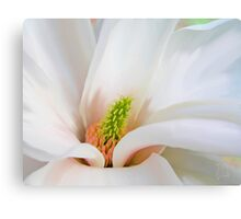White Magnolia flower, floral art Canvas Print