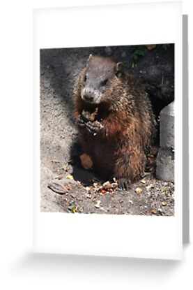 Baby Groundhog by Elaine  Manley