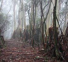 Blue Mountains Ash in Mist by Geoff Smith