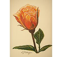 Sundance Rose Photographic Print