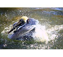 Pelican Fun Photographic Print