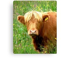 Buttercup says ' Who said beefburger ?'............ Canvas Print