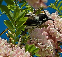 Spring Feast by Barb Leopold