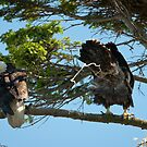 Baby Eagle Poops, Grossing Out Dad by David Friederich