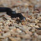 Snake!!!! by denahickman