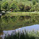 Botanical Gardens, Steamboat Springs, Colorado by Katagram