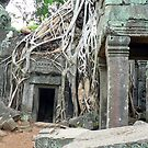 Ta Prohm, Cambodia. by John Mitchell