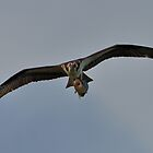 Osprey with Bass by Mully410