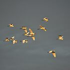Fifteen Egrets by Mully410