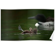 Loon Chick SOS Poster