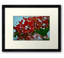 Vivid Blooms Framed Print