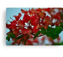Vivid Blooms Canvas Print