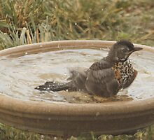 Cooling Off by Barb Miller