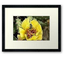 Wild Cacti flower. Framed Print