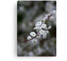 """Blossoms"" Canvas Print"