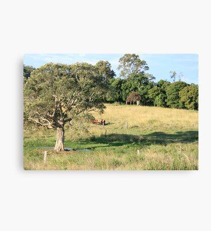 Late Afternoon in Nerang Canvas Print