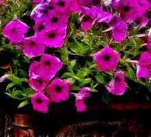 Rustic Garden by sundawg7