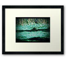 swamp Framed Print