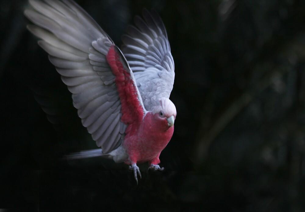 Wings 2 by byronbackyard