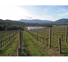 Syme Vineyard Photographic Print