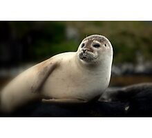 portrait of a seal  Photographic Print