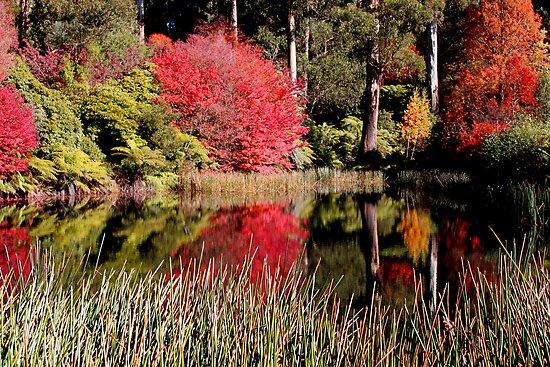 National Rhododendron Garden-Olinda
