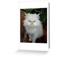 "Princess Kendra,  ""With Major Cattitude""  Greeting Card"