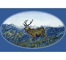 Red Deer on the Cabrach Photographic Print